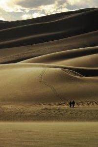 Survival desert scene image
