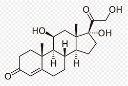Cortisol image