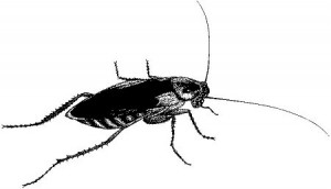 Using smartphones for pest control image