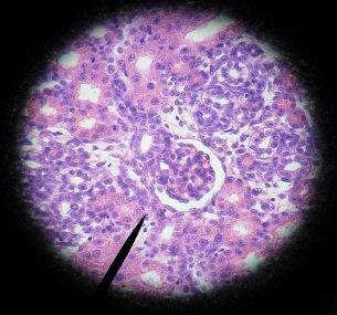 Molecule image